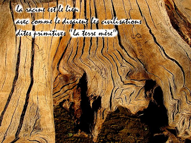 racine arbre de vie